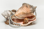 Large pink seashell with a string of pearls on a white background — Stock Photo
