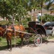 Horse-drawn carriage taxi waiting in tropical garden — Stock Photo #42735173
