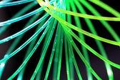 Neon wire — Stock Photo