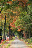 Long walks during the autumn — Stock Photo