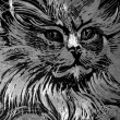 Stock Photo: Cat etching