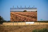 Before harvest and post-harvest — Stock Photo