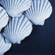 Shell background — Stock Photo