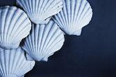 Shell background — Stock Photo