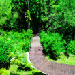 Wooden Walk Curve Way in The Garden — Stok fotoğraf