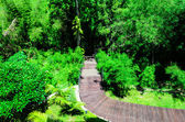 Wooden Walk Curve Way in The Garden — Stock Photo