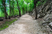 Stone Way in forest — Stock Photo