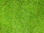 Grass Texture background — Stock Photo