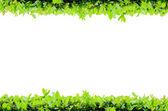 Isolate Horizontal Flower Frame — Stock Photo