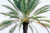 Alone Palm Tree — Stock Photo