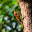 Small Lizard — Stock Photo #36060107