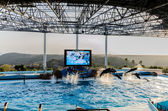 Dolphin show in the pool — Stock Photo