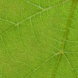 Close up green leaf texture - Foto Stock
