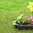 Stock Photo: Flowers in pot