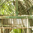 Bird cage - Stock Photo