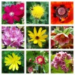 Stock Photo: Spring flowers collection