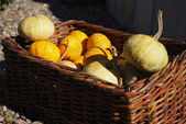 Mixed pumpkins — Stockfoto