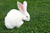Easter bunny on green grass — Stock Photo