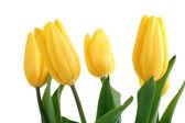 Spring Flowers Tulips — Stock Photo