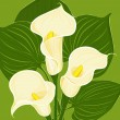 Floral background with Zantedeschia aethiopica — Векторная иллюстрация