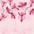 Pink floral background with orhid — Imagen vectorial