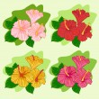 Set of colored hibiscus — Stock Vector