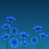 Vector background with blue cornflowers and rain — Stock Vector