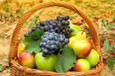 Wicker basket filled with autumn fruits, detail — Stock Photo