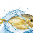 Photo: Fish with water on white background