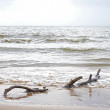 Drift wood on beach at low tide — Stock Photo
