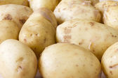 Close up image of Jersey Royal new potatoes — Stock Photo