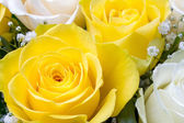 Close up image of yellow and white roses — Foto Stock