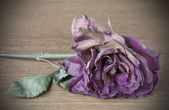 Vignette image of dead purple rose — Stock Photo
