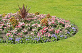 Ornamental flower bed in gardens — Stock Photo