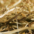 Stock Photo: Needle in a haystack