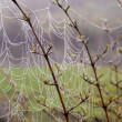 Spiderweb at dawn — Stock Photo