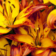 Yellow saturated flower — Stock Photo