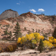 Fall Season at Zion National Park - Stock Photo