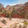 Red Leaves at Zion National Park - Stock Photo