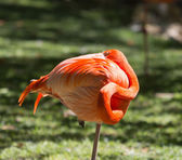 Orange Flamingo Ball — Stock Photo