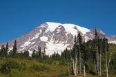 Mount Rainier in the Summer — Stock Photo