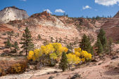 Pretty Yellow Leaves at Zion — Stock Photo
