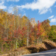 Blueridge Parkway in North Carolina — Stock Photo #35564729