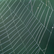 Spiderweb with dew in the morning — Stock Photo