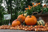 Pumpkins assortment close up — Stock Photo
