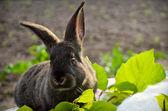 Young rabbit — Stock Photo