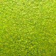 Duckweed Lemna minor background — Stock Photo