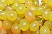 Sweet grapes — Stock Photo