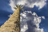 Palm trees against the blue sky Isolated — Stock Photo