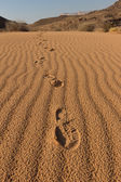 Footsteps on the desert sand — Stockfoto